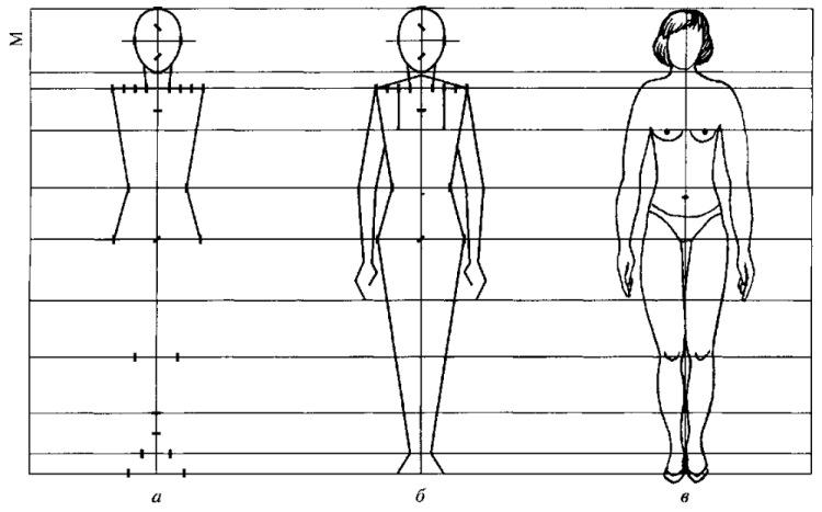 Строение человека схема по изо