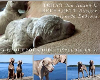 http://data3.i.gallery.ru/albums/gallery/553801-1ae82-108958998-400-ub5800.jpg