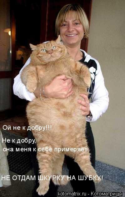 devushki-s-bolshimi-siskami-erotika