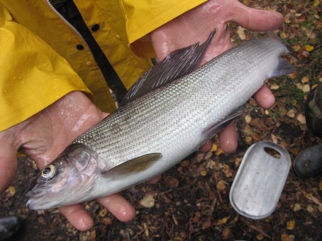 рыбалка в карелии в сентябре цены