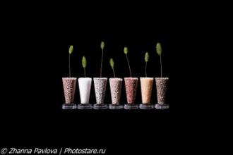 Фотограф предметной съемки Жанна Павлова - Москва
